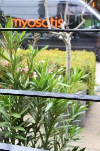 terrassen3