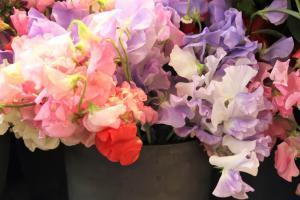 bloemen7